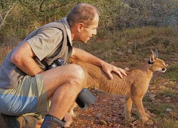 Tetha-caracal-animal-communication-simply-energetic