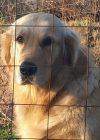 goldie-animal-communication-simply-energetic